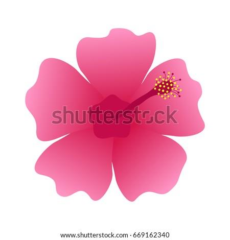 Hibiscus flower blossom, vector illustration icon, isolated on white background. Rose mallow, marsh mallow dark pink flower.