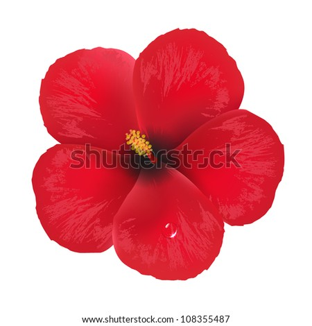 Hibiscus Flower, Isolated On White Background, Vector Illustration