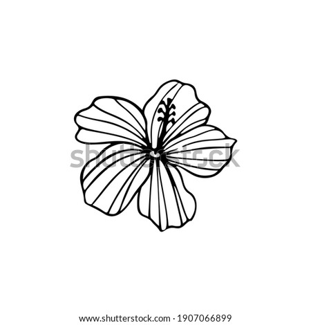 Hibiscus flower outline. Hibiscus line art vector illustration isolated on white background. Tropical flower silhouette icon, blossom doodle and simple element. Exotic tropical plant symbol.