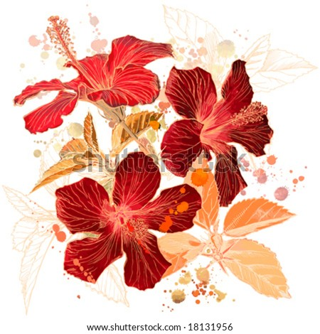 stock vector Hibiscus flower vector watercolor paint