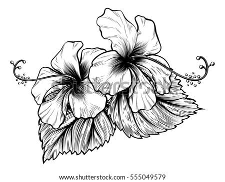 Hibiscus Flower Background Download Free Vector Art Stock
