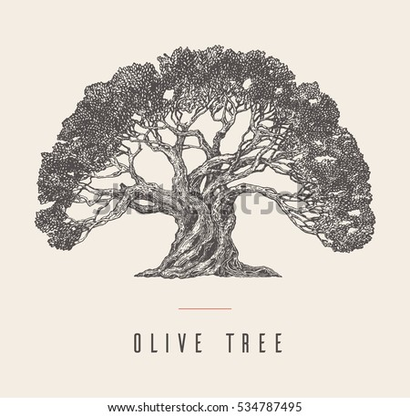 High detail illustration of an old olive tree, hand drawn, vector