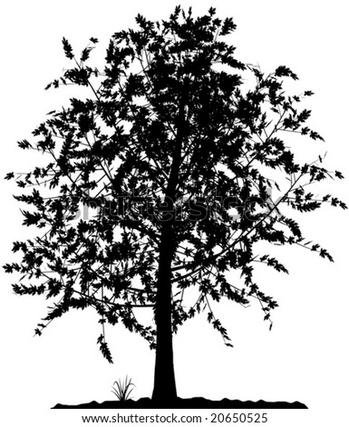 tree silhouette vector. detailed tree silhouette