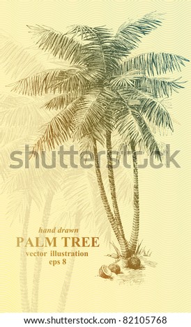 Highly detailed hand drawn palm tree.