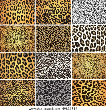Highly detailed leopard vector pack - 12 different pattern