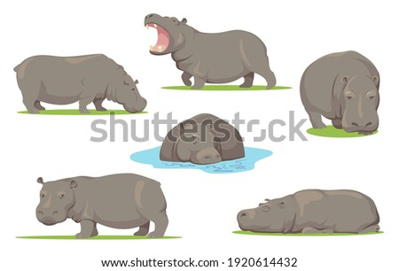 Hippo in different poses flat set for web design. Cartoon wild creature standing, sitting and walking on white background vector illustration collection. African animals, zoo and wildlife concept Photo stock ©