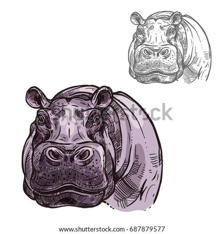 Hippopotamus hippo head or muzzle sketch icon. Vector isolated African wild mammal of pygmy hippo animal for zoology, mascot blazon of sport team, wildlife savanna nature