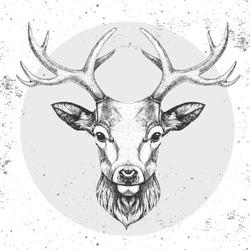 Hipster animal deer. Hand drawing Muzzle of deer