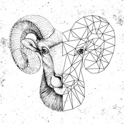 Hipster animal realistic and polygonal ram or mouflon face on grunge background. Astrology zodiac sign Aries