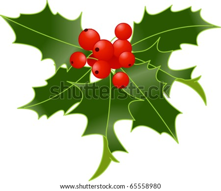 Holly berry isolated on white background
