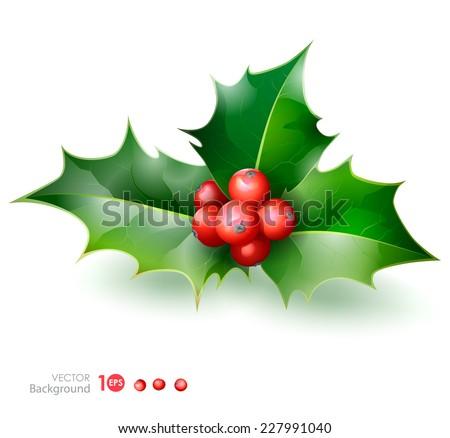Holly. Christmas Holly Berry. Vector  EPS 10.