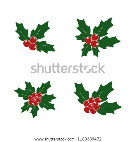 holly plant vector