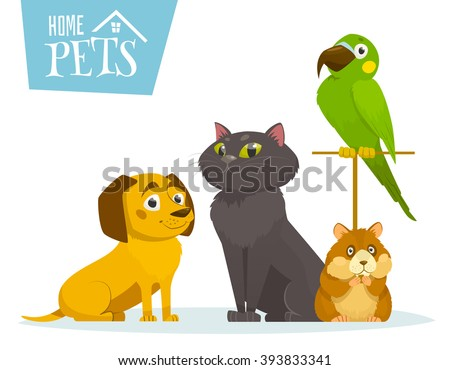 Home pets sitting in line, isolated on white, vector cartoon illustration, cat dog hamster bird parrot