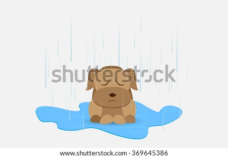 homeless dog in rainy day