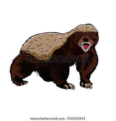 honey badger illustration