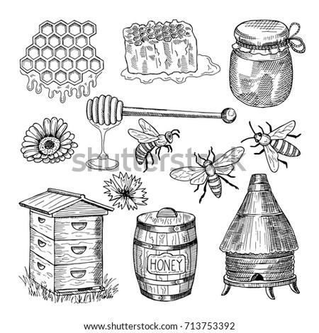 Honey, bee, honeycomb and other thematically hand drawn pictures. Vector vintage illustration. Honey bee insect, honeycomb organic