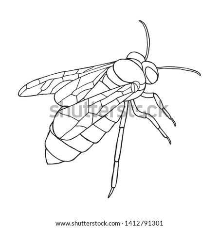 Honey bee icon. Hand drawn bee is isolated on white background. Vector illustration can be used as Manchester city symbol or for your graphic design. EPS10
