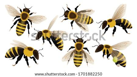 Honey bee isolated cartoon set icon. Vector illustration animal of honeybee on white background. Vector cartoon set icon honey bee .