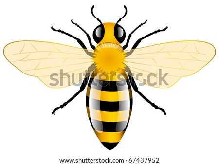 honey bee  vector illustration