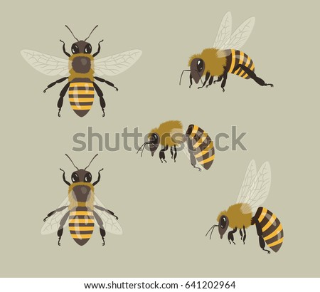 Honey Bees, different views