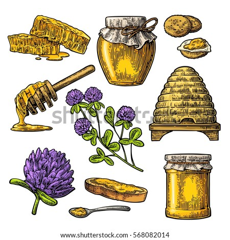 Honey set. Jar, hive, clover, spoon, cracker, bread and honeycomb. Vector vintage color engraved illustration. Isolated on white background.