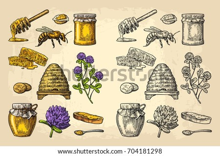 Honey set. Jars of honey, bee, hive, clover, spoon, cracker, bread and honeycomb. Vector vintage color engraved illustration. Isolated on beige background
