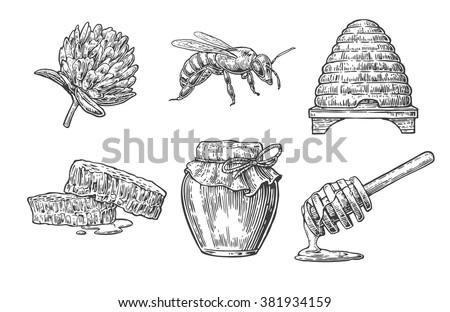 Honey set Object.  Vector vintage engraved illustration. Isolated on white background