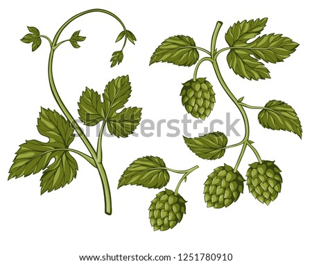 Hop plant isolated on white. Hop on a branch with leaves, hand drawn, colored illustration. Hops set. Beer hop