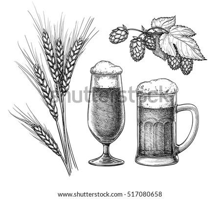 hops  malt  beer glass and beer