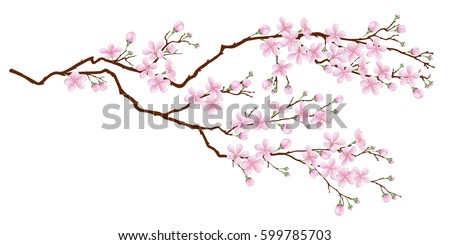 horizontal branch of cherry