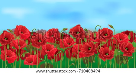 horizontal seamless poppy field