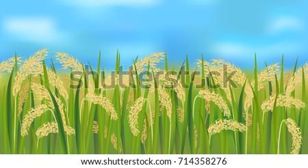 horizontal seamless rice field