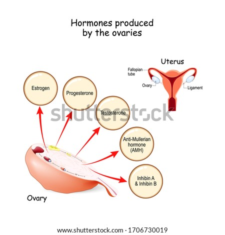 Hormones produced by the ovaries. Human endocrine system. Estrogen, Progesterone, Testosterone, Anti-Mullerian hormone (AMH) and Inhibin. Vector illustration for medical, education and science use Foto d'archivio ©
