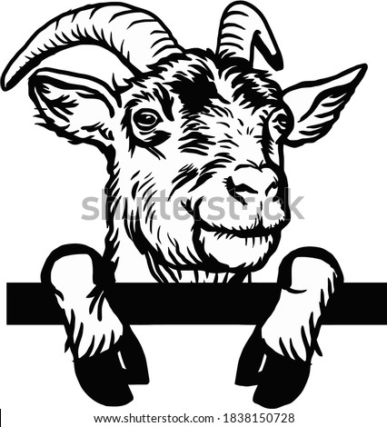 Horned goat - Cheeky Goat peeking out - face head isolated on white - vector stock Сток-фото ©