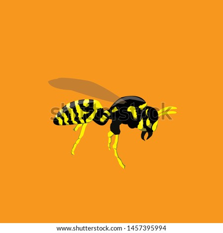 Hornet Vector illustration illustration illustration