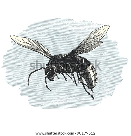 "Hornet - vintage engraved illustration - ""Cent récits d'histoire naturelle"" by C.Delon published in 1889 France"