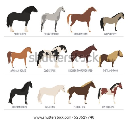 Horse breeding isolated icon set with mustang, paso, pinto stallion. Farm animal. Flat design. Vector illustration