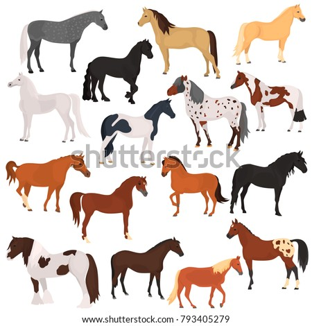 horse breeds color flat icons