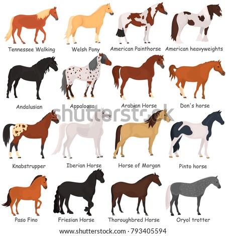 horse breeds color flat icons...