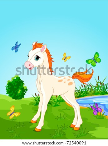 Horse foal  in the meadow  on a sunny day. Background is separate paths and can be moved or removed.