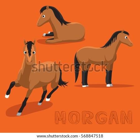 horse morgan cartoon vector