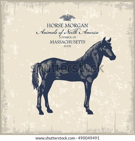 horse morgan  pet  animal of