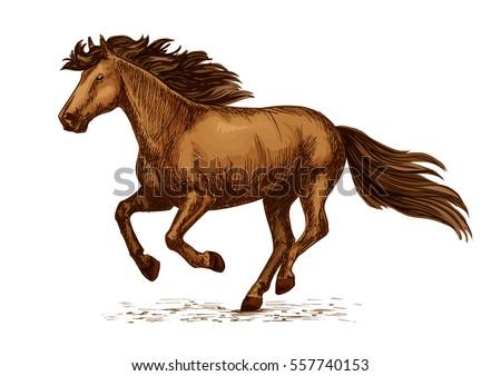 horse racing vector sketch