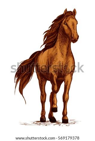 horse vector sketch arabian