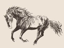 horse vintage engraved illustration, retro style, hand drawn