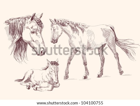 horses collection hand drawn vector llustration realistic sketch
