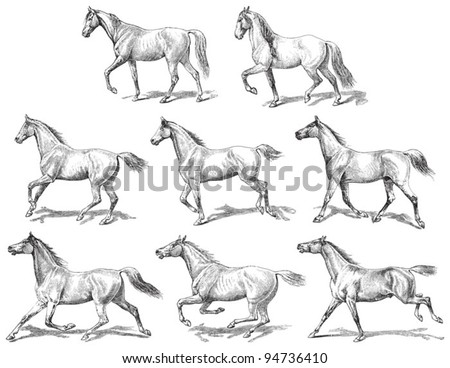 horses collection   vintage