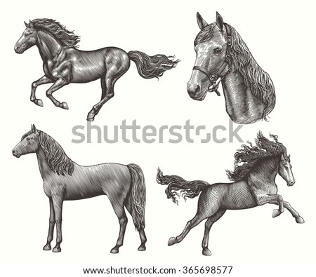 horses. design set. hand drawn...