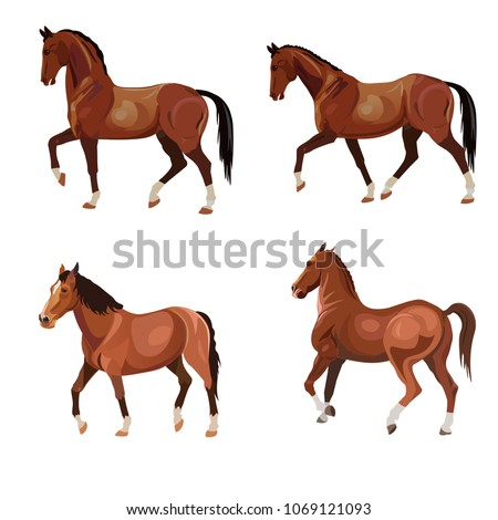 Horses in various poses . Set of vector illustration isolated on white background