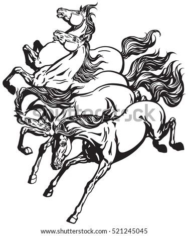 horses running wild mustangs